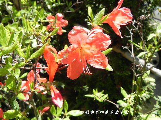satuki_20130408222537.jpg