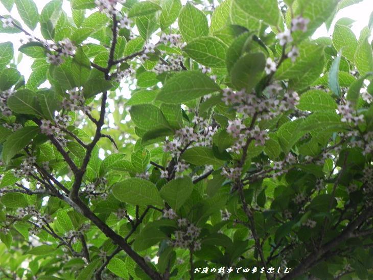 umemodoki4_20130528204140.jpg