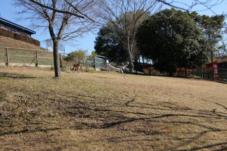 2013-12-31 相模湖走り納め 059