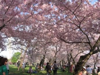 2012. 03 Sakura 096