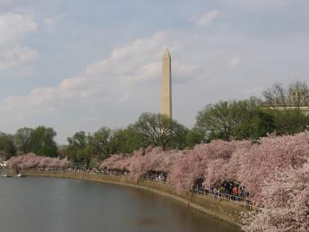 2012. 03 Sakura 055