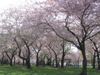 2012. 03 Sakura 040