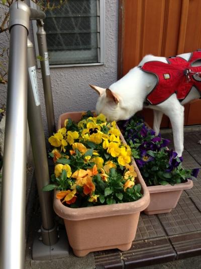 fc2blog_20130403020116ee1.jpg