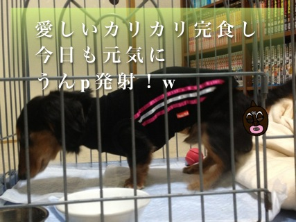 IMG_3602_20120503234315.jpg