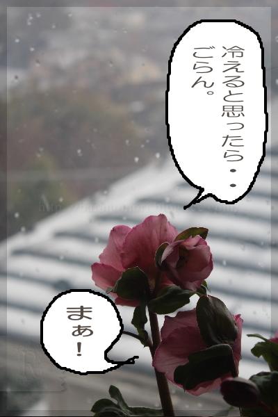 02_201402041416259fd.jpg