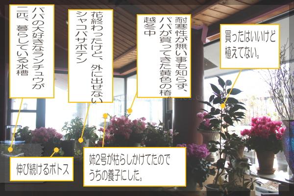 10_2014020414164805c.jpg