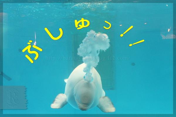鴨川シーワールド 20140122
