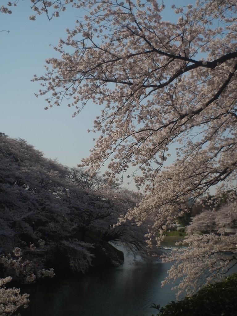 千鳥ヶ淵byアンジェニュー004