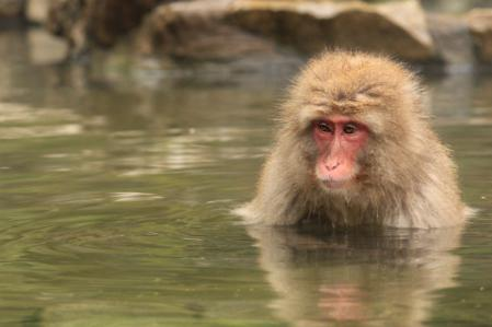 お猿さんお風呂_800