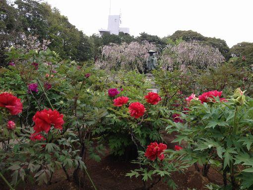 大師の牡丹と桜