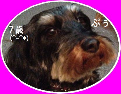 愛犬のBirthday
