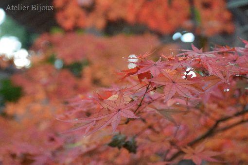 022-紅葉
