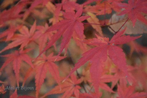 025-紅葉