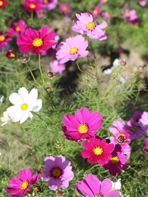 flower-20131018-saezuri01.jpg