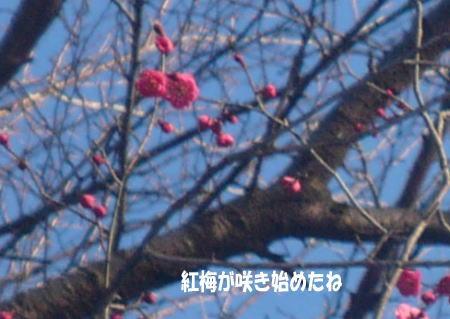 20130222_1.jpg
