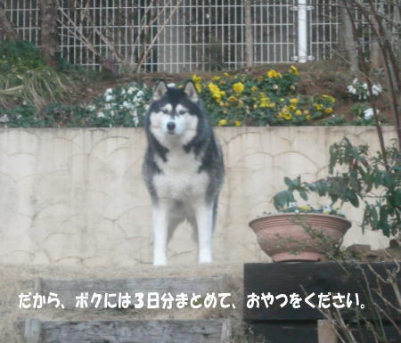 20130301_1.jpg