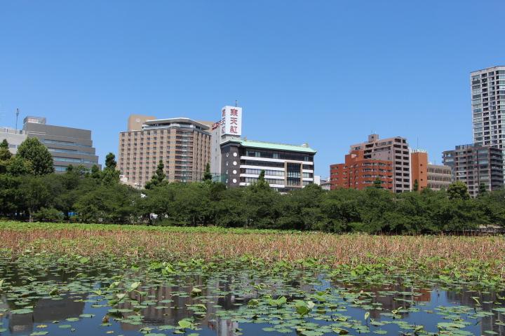 台東区・不忍池より、東天紅・文京区方面 裏が湯島