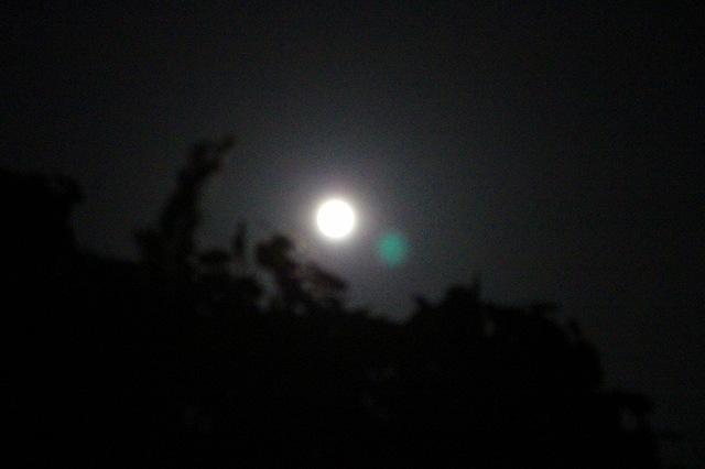 木の上に満月