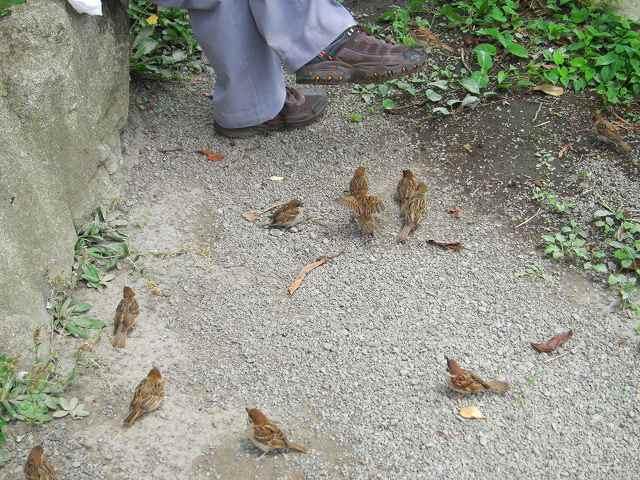 雀が寄ってくる・・・無論、餌を求めて