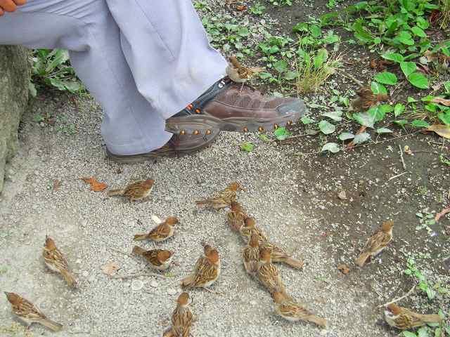 こんなに人なつこい雀を観たのは初めて