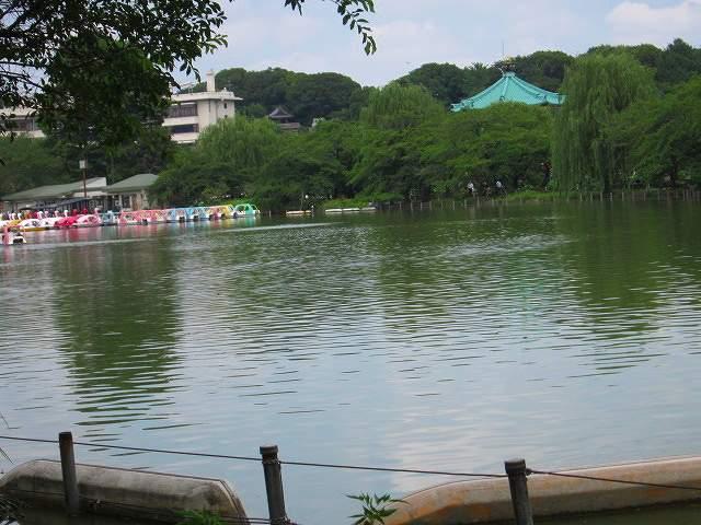 こちら側の池には蓮はひとつもない(蓮の池の反対側)