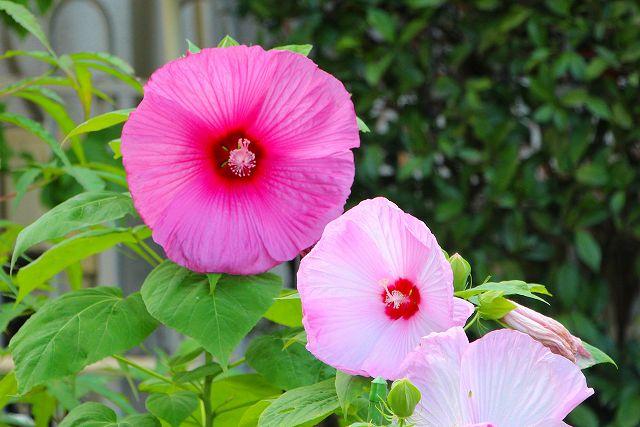 まだ、この花の名前は?