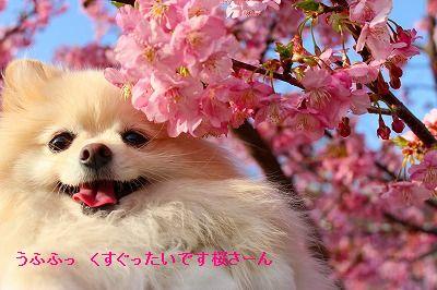 s-IMG_3536_20120307004724.jpg