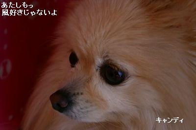s-IMG_3684.jpg