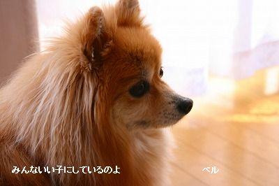 s-IMG_3690_20120315193759.jpg