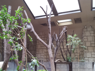 コアラはどこ?