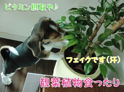 20110820_01.jpg