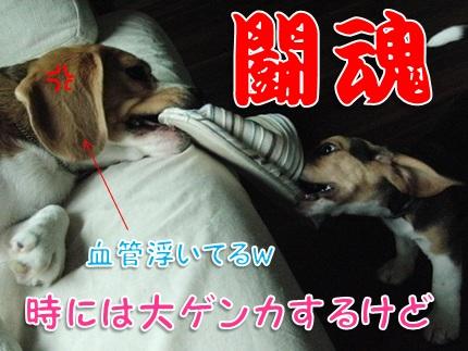 20110820_04.jpg