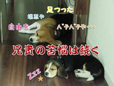 20110820_06.jpg