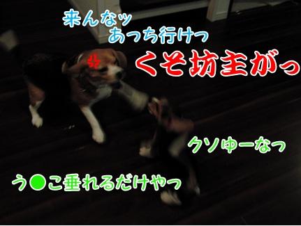 20110824_01.jpg