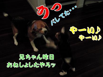 20110824_03.jpg