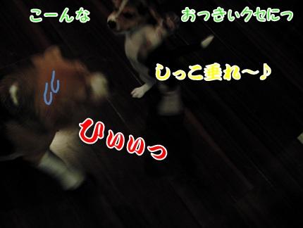 20110824_04.jpg