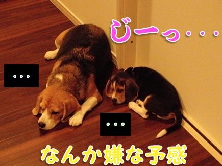 20110829_01.jpg