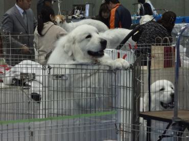 ピラニア山犬