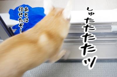 IMGP8033-4.jpg