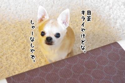 IMGP8201-4.jpg