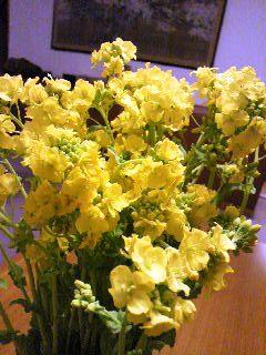 小学校菜の花