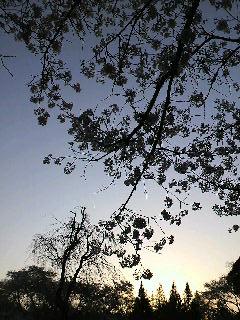 神代植物園4 夕日