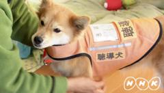 photo130217聴導犬