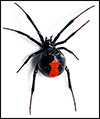 Black-Widow-blog.jpg