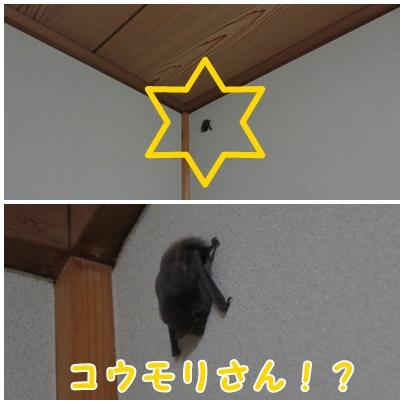 2612113.jpg