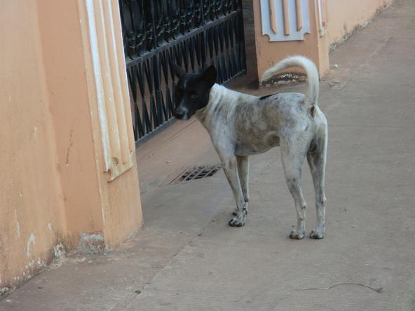1 12.2.23ガングロの犬6 (4)