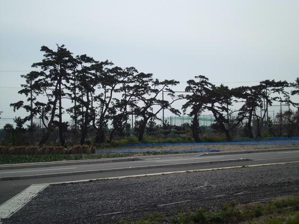 6 12.4.10浜松4 (112)