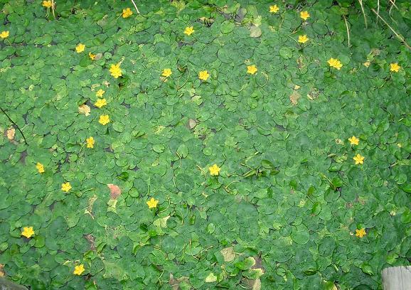 5 04.9.25清水公園花のファンタジア2 033