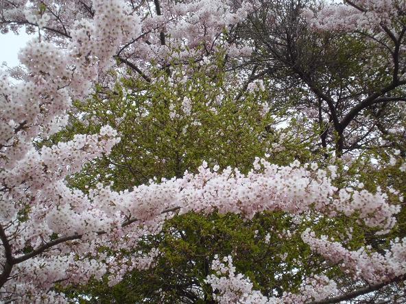 12.4.25-26鎌先温泉 (95)