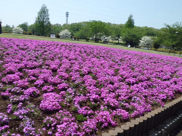 12.4.28結夢撮影花の丘公園 (44)